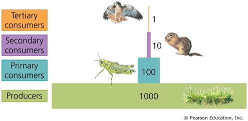 solved interpreting graphs and data trophic levels use t
